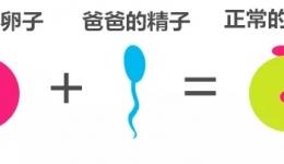 试管婴儿过程中的小插曲--异常受精